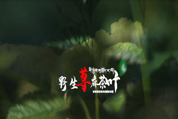 荨麻茶叶广告片